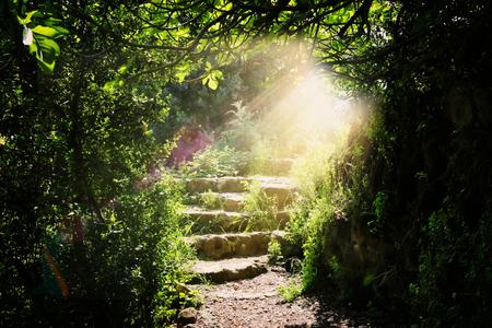 Weg- en stenen trappen in magisch en mysterieus donker bos met mystiek zonlicht. Sprookjesconcept