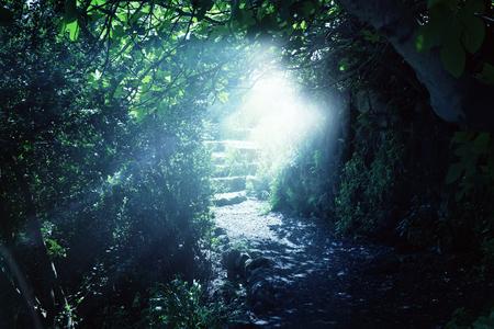 Carretera y escaleras de piedra en un bosque oscuro mágico y misterioso con la luz del sol mística. Concepto de cuento de hadas