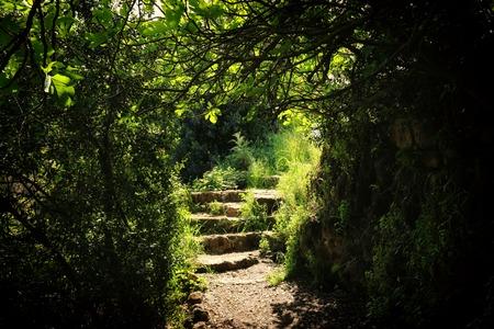 Route et escaliers en pierre dans la forêt sombre magique et mystérieuse. Concept de conte de fées