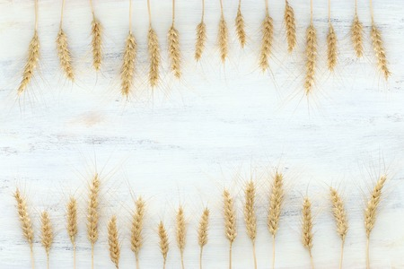 Top view of wheat crops over white wooden background. Symbols of Jewish holiday - Shavuot 版權商用圖片
