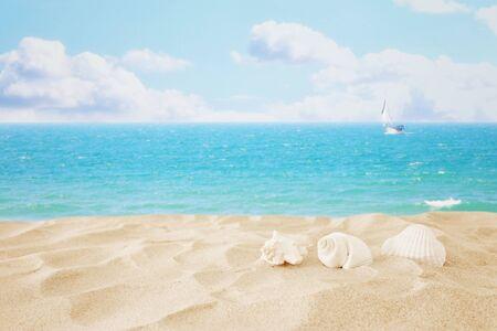 Spiaggia di sabbia vuota e conchiglie davanti allo sfondo del mare estivo con spazio di copia