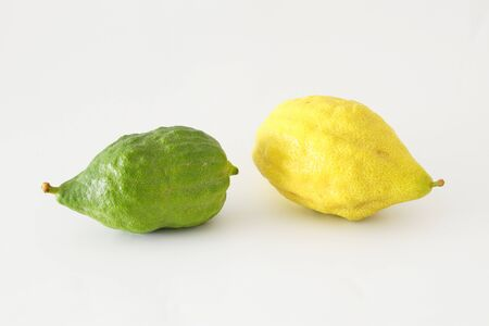 religion image of Jewish festival of Sukkot. Traditional symbol one of the four species: citron (Etrog). white background