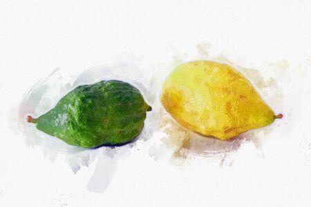 religion image of Jewish festival of Sukkot. Traditional symbol one of the four species: citron (Etrog). white background