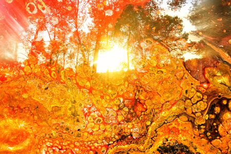 art concept of double exposure in nature. forest and fall colors Foto de archivo