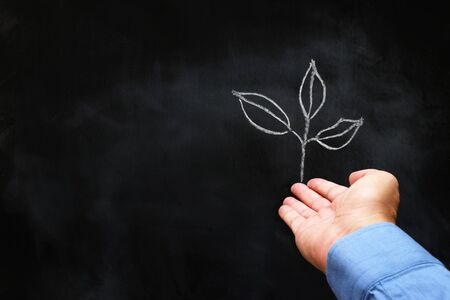business concept of man hand with drawn small plant on blackboard. growth, teaching and vision metaphor Banco de Imagens
