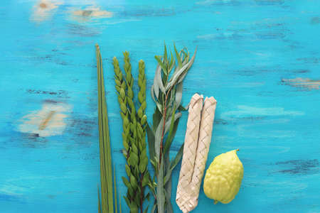 Jewish festival of Sukkot. Traditional symbols (The four species): Etrog (citron), lulav (palm branch), hadas (myrtle), arava (willow) Archivio Fotografico - 151071445
