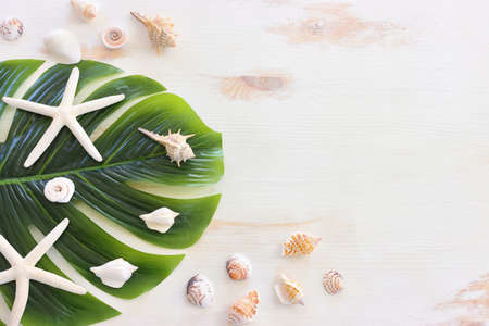 nautical concept with monstera leaf, seashells over white wooden background Standard-Bild