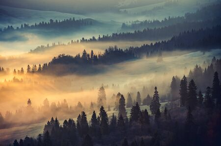 carpathians: Misty mountain forest landscape in the morning, Poland Stock Photo