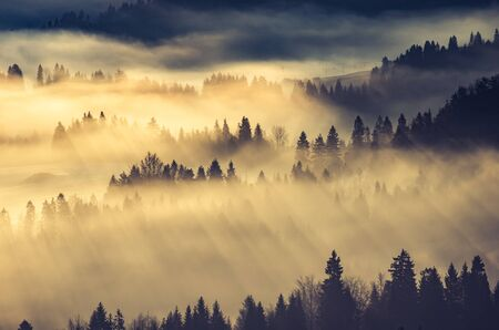 Misty mountain forest landscape in the morning, Poland 스톡 콘텐츠