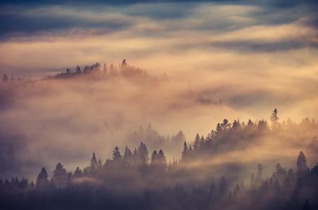 carpathians: Misty forest landscape, panorama of Carpathian mountains in Poland Stock Photo