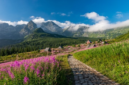 Tatra mountains, Poland landscape, colorful flowers and cottages in the Valley of the Pacific, summer tourist trail