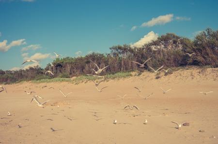 Sandy beach and seagulls on Baltic sea coast, Poland, Rowy Stock Photo