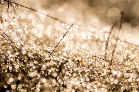 Close up of raindrops in the morning sun Stock Photo