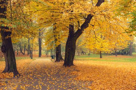 Colorful autumn park in Krakow, Poland