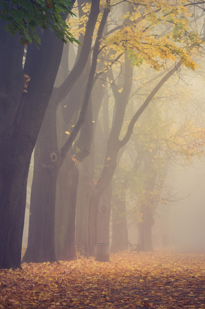 Autumn foggy colorful tree alley in the park on a misty day in Krakow, Poland