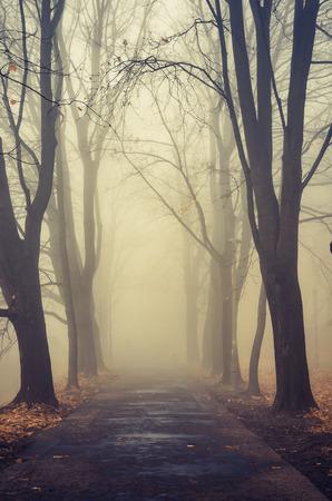 Autumn foggy tree alley in the park on a misty day in Krakow, Poland Stockfoto