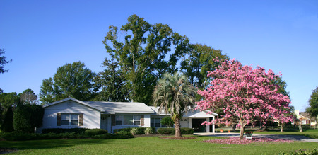 Front of a white ranch-style house with a Pink Tabebuia tree in full bloom Stock Photo