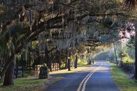 country roads: The images shows a lightly winding Florida road with a canopy of live oak trees just after sunrise
