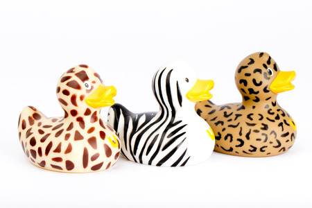 Three plastic wild ducks photo