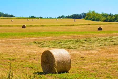 compacted: Several bales on a field on a beautiful sunny day with blue sky. Stock Photo