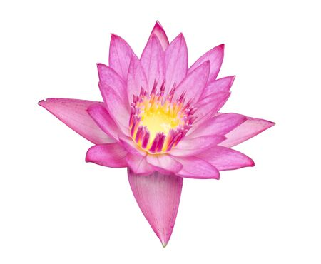 Close up of beautiful  lotus blossom   isolated on white background, clipping path included photo