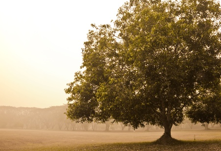 Vintage view of tree  in morning mist at Sukhothai historical park,Thailand photo