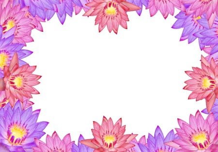 text area: Colorful lotus flowers with text area