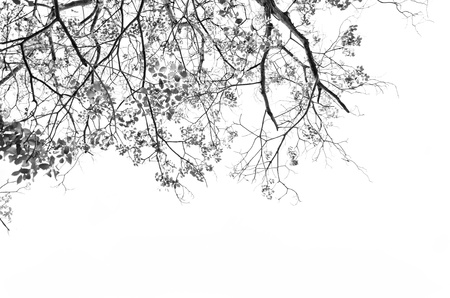 Tree with leaves against white background