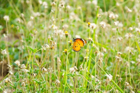 Little  yellow butterfly on tiny flowers
