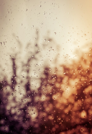Rain drops on glass with blurred tree at back Standard-Bild