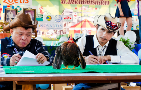nakhon: NAKHON PATHOM THAILAND-JANUARY 12  Unknown judges referee Serama at the contest on January 12, 2014  in Nakhon Pathom, THAILAND  Serama bantam is the smallest breed of chicken in the world  Editorial