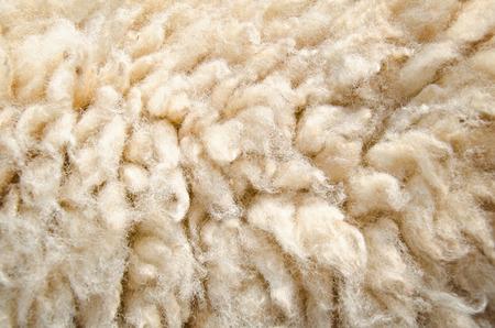 furry stuff: Close up of sheep wool skin background