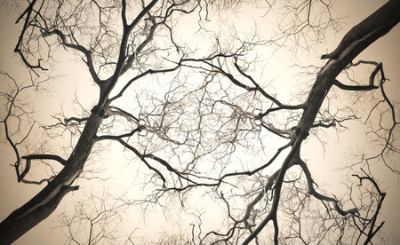 Alte Trockenen Baum Mit Zweigen Und Ohne Blätter Gegen Einen Blauen ...