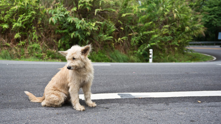 Cute homeless stray dog on the road