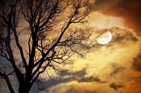 Silhouette of dead Tree against moon and clouds in a cloudy night.  Stock Photo
