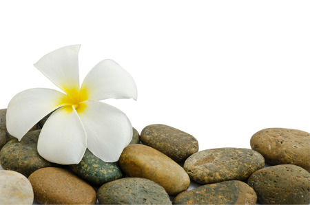white and yellow frangipani flower (pagoda tree or temple tree) on stones isolated on white background. Stock Photo