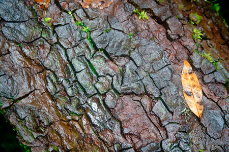 Old Wood Tree bark texture with one leaf Stock Photo