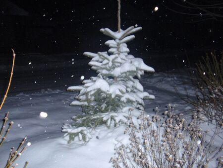 nightly: Nightly snowfall, Christmas