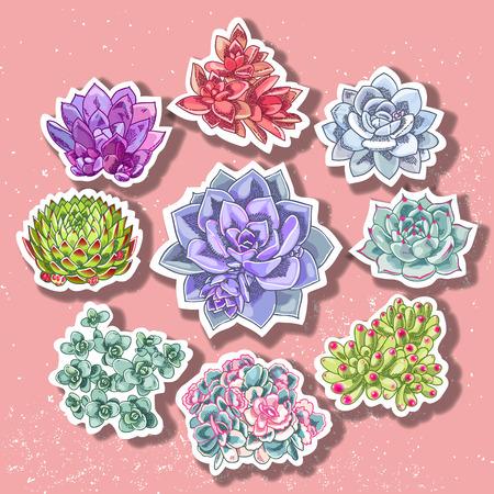 Succulent patch illustration. Floral stickers. Vector decorative wreath.