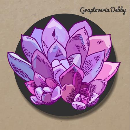 The illustration of beautiful succulent graptoveria Debby. Vector floral design. Botanical card. Çizim