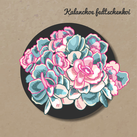 The illustration of beautiful succulent kalanchoe fedtschenkoi. Vector floral design. Botanical card. Çizim