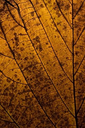 liveliness: Leaf macro closeup