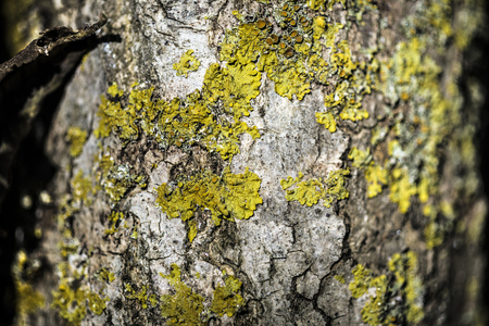 tree bark macro detail