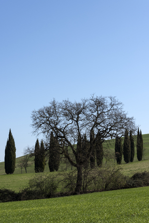 trees in the countryside Stock fotó