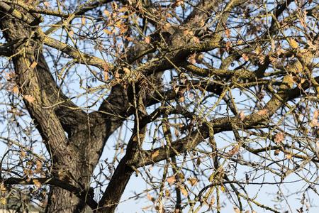 oak tree detail Stock fotó