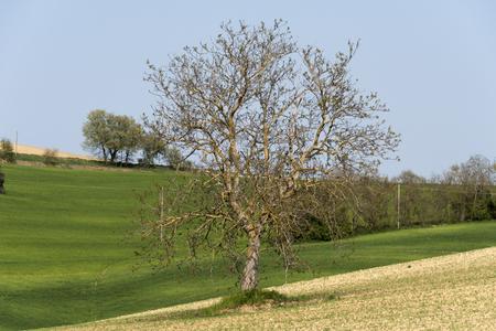tree in the countryside fields Stock fotó
