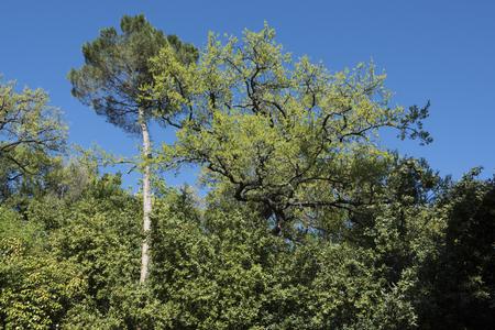 big trees Stock fotó