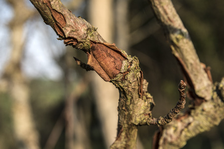 ruined tree branch detail Stock fotó