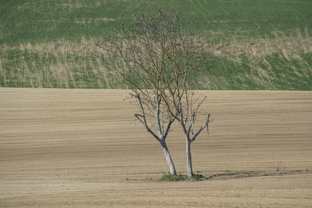small tree in the fields