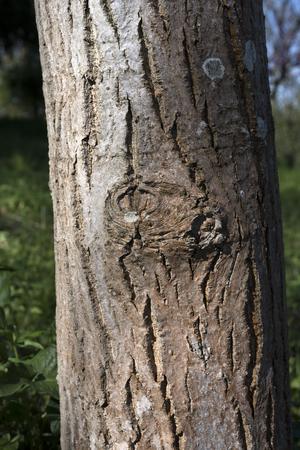 tree trunk detail Stock fotó
